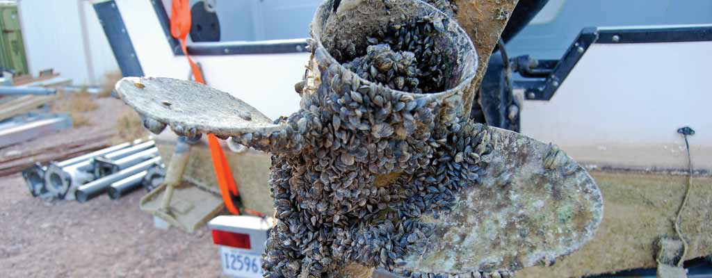 a propeller covered in invasive quagga mussels